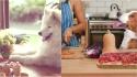 Benefícios da alimentação natural balanceada para o seu pet. (Foto: Divulgação/Pet Md | Foto: Divulgação/Dogs Naturally)