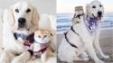 Samson e Cleo, um cão e uma gata que se tornaram companheiros inseparáveis. (Foto: Instagram/calvin.andco)