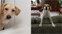 Se o seu cachorro te segue aonde quer que você vá, isso pode ser um problema; entenda. (Foto: Divulgação/Wendy | Divulgaçõ/Suzanne Kreiter)