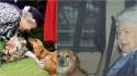A rainha está de luto pela perda de um de seus dois últimos cães restantes semanas antes do Natal. Nas fotos: a rainha com um de seus cães. (Foto: Reprodução/PA)