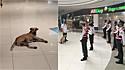 Cachorro de rua que invadiu shopping é contratado para fazer parte da segurança e é recebido com muito amor. (Foto: Facebook/DZMM TeleRadyo)