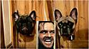 Cães que tiveram que ficar separados criam buraco em porta de madeira para se verem. (Foto: Kennedy News and Media)