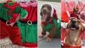 Fundadora de abrigo confecciona roupinhas de Natal para cães para arrecadar fundos. (Foto: Facebook/Paula Cecilia Alarcon Cruz)