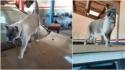 Em aventura fora de série, gato sai para passear e vai parar há 700 km de casa. (Foto: Reprodução / TV Anhanguera)