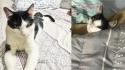 Gato passa a morar em casa que estava sendo construída e se recusa a sair até ser adotado pela família. (Foto: Facebook/Luiz Fernando Pamela Figueiredo via Memes dos gatos encrenqueiros e sinceros)