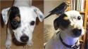 Cachorro salva passarinho que encontrou caído na rua e eles acabam fazendo amizade. (Foto: Facebook/Gunnar Kr Sigurjónsson)