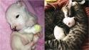 Gatos adotam filhote de cachorro que quase foi devorado pela própria mãe. (Foto: Arquivo Pessoal/Ale Oviedo)