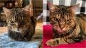 Gato que parece sempre estar zangado na verdade é um amorzinho de felino. (Foto: Instagram/gigglestheangrycat)