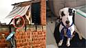 Cão negligenciado pela família ganha ajuda de vizinhos. (Foto: Facebook/Paty Kas Astrid)