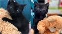 Gatinha filhote que foi encontrada desidratada e sozinha ganha ursinho de pelúcia. (Foto: Facebook/Catsnip Etc)