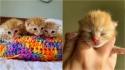 Trio de gatinho que vivia sozinho na rua e estava com infecção é resgatado e tratado. (Foto: Reprodução/Jin Bottle Babies)