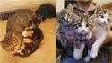 Gata deixa três gatinhos na varanda de casal e aparece dois meses depois com outra ninhada. (Foto: Instagram/meggieslittlezoo)