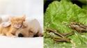 Nestlé lança linha de rações para pets com proteína de inseto e outras alternativas à carne. (Foto: Divulgação/Pixabay   Divulgação Unsplash/James Wainscoat)