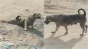 Homem vê cachorro se arrastando em estrada, para ajudá-lo e descobre que o cão estava fingindo. (Foto: Reprodução/ViralPress)