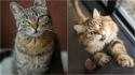 Confira razões essenciais pelas quais os gatos miam. (Foto: Divulgação Unsplash/Marco Biondi | Divulgação Pixabay/marieclaudelemay)