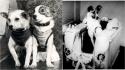 Os cães mais famosos da ciência. (Foto: Pinterest/syfy.asia | Air and Space Museum)