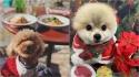 Alimentos típicos do Natal que são tóxicos para os cães. (Foto: Instagram/applepie1043   Instagram/petsalonwish)