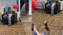 Cachorrinho se diverte com balão em sala de espera distraindo clientes de concessionária (Foto: Reprodução Facebook/ViralHog)