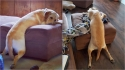 Cachorro escolhe as posições mais estranhas para dormir enquanto a dona registra todas elas. (Foto: Arquivo Pessoal/Kimberley Spencer)