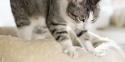 Razões pela qual os gatos amassam pãozinho.