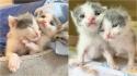Gatinhos gêmeos recém-nascidos são acolhidos por abrigo após ficarem órfãos. (Foto: Instagram/our_fostering_tails)