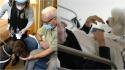 Cães de terapia fazem companhia a idosos que não podem receber a visita de familiares em asilo. (Foto: Reprodução/Associated Press)