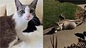 Gatinha encontra família que a alimenta e aparece dias depois com os seus filhotes. (Foto: Facebook/Alley Cat Rescue)