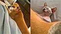 Cachorro deita em cima de gato Sphynx e dona brinca: Não deite no meu bebê!(Foto: Reprodução / ViralHog.com)