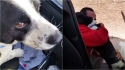 Dono chora de alegria ao reencontrar seu cão que ficou 12 dias desaparecido; assista. (Foto: Reprodução Youtube/Anabel_V)