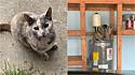 Mulher se muda e descobre que a nova casa já possui um morador: um gatinho. (Foto: Facebook/Giselle Bodin Lyons via My house, not my cat)