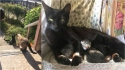Gata que havia criado afinidade com mulher e o seu gato, bate na sua porta de madrugada para dar à luz. (Foto: Arquivo Pessoal/Ida Floreak)