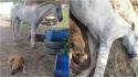 Mesmo sem enxergar, cachorro de resgate faz companhia e protege cavalo que foi resgatado com a pata machucada. (Foto: Arquivo Pessoal/Fernando Machado)