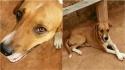 Cachorro fica 12 horas em frente a UPA esperando o dono morador de rua que morreu na unidade. (Foto: Reprodução/G1)