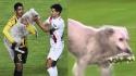 Cachorro invade partida de futebol na Bolívia e um dos jogadores o adota. (Foto: Reprodução Twitter/Agencia Boliviana de Información)