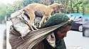 Idosa indiana é vista carregando seu cachorro nos ombros após terem caminhado por dois dias. (Foto: Twiiter/@WickedWitch74)