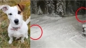 Cadela Jack russell dá a vida para salvar dono de 10 anos do ataque de lobo. (Foto: Social Media)