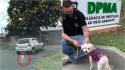 Delegado Matheus Laiola prende em flagrante suspeito de abandonar cadela em Curitiba. (Foto: Instagram/delegado.matheuslaiola)