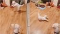 Cão e gato viralizam no TikTok ao dançar estranhamente ritmo de tango. (Foto: Reprodução/TikTok)