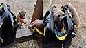 Suricatos curiosos ajudam eletricista a fazer seu trabalho em santuário animal. (Foto: Twitter/@doodlingglass)