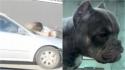 Mulher pula em capô de carro em movimento para tentar impedir roubo de cachorro. (Foto: Reprodução/YouTube/Click 2 Houston)