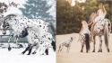 Cavalo, pônei e cão chamam a atenção por terem a pelagem exatamente igual. (Foto: Caters News Agency)