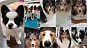 Moradora cria placa avisando entregadores sobre seus cães carinhosos. (Foto: Facebook/Marissa Alexis Xicotencatl via Dogspotting Society)