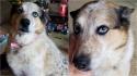 Cadelinha fica com família de dono que tirou a própria vida. (Foto: Facebook/Dana Kissing via Dogspotting Society)