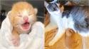 Filhote de gato que foi encontrado sozinho com poucos dias de vida é acolhido por mamãe felina que o insere à sua ninhada. (Foto: Instagram/catmum_perth)