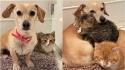 """Cadelinha """"adota"""" dois filhotes de gato resgatados das ruas e os ajuda a superar seus medos. (Foto: Instagram/shibuyarollcall)"""