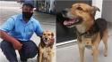 Cachorro que chegou pedindo água e comida em posto de combustível é acolhido e promovido a funcionário com crachá. (Foto: Folhapress/Patrícia Pasquini)