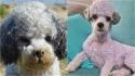 Dona decide dar banho caprichado em seu cachorrinho encardido e acaba deixando ele roxo. (Foto: Facebook/People & Puppers)