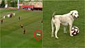 Cachorrinho invade partida de futebol para demonstrar suas 'habilidades de drible'. (Foto: Reprodução Twitter/@Reuters)
