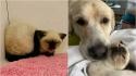 Cadela faz amizade com gatinha antissocial e transforma sua personalidade mal-humorada e arisca. (Foto: Arquivo Pessoal/Kendal Benken)