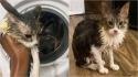 Dona liga máquina de lavar roupas sem perceber que o seu gatinho estava lá dentro. (Foto: Reprodução/Mercury Press & Media Ltd)